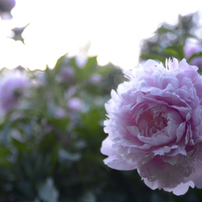 Blommor-14