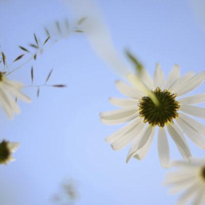 Blommor-15