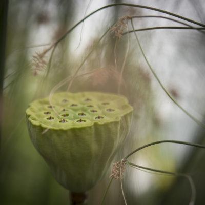 Blommor-4