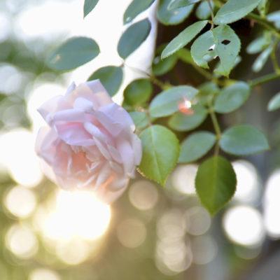 Blommor-7