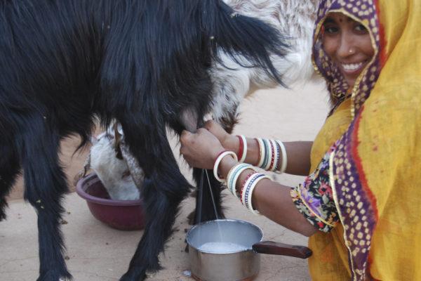 Indien2011-33